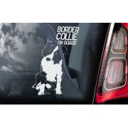 Border Collie - v01