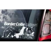 Border Collie - v02